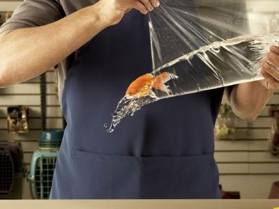 تصویر تبلیغاتی شرکت حمل بار Sedex: ماهی